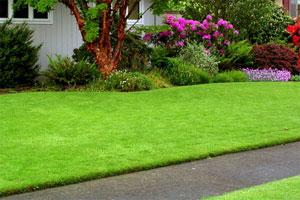 Выбор газона для вашего двора